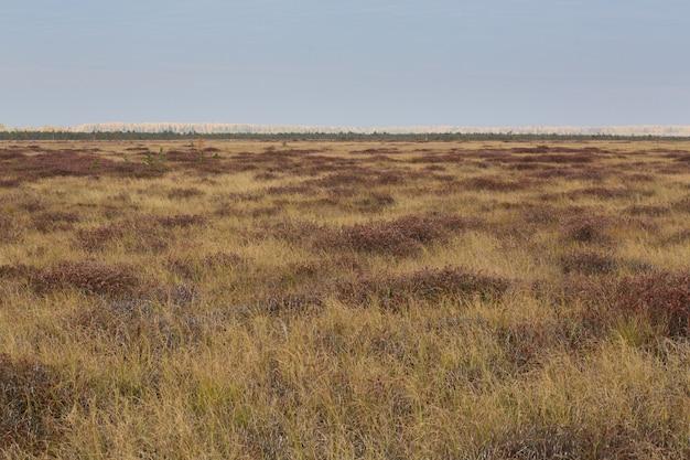 Otoño campo marrón en el pantano