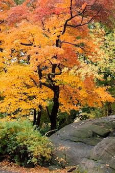 Otoño en central park en manhattan, nueva york, estados unidos