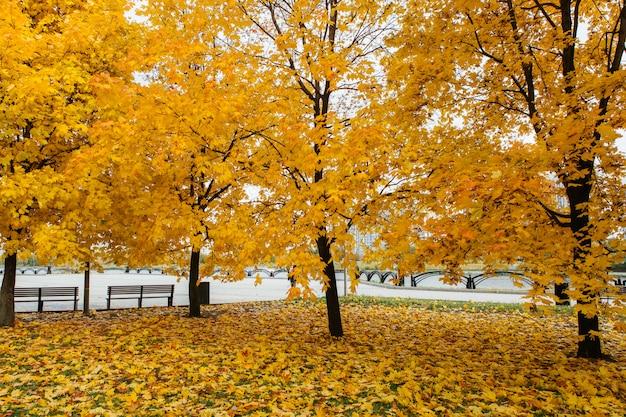 Otoño coloridos árboles y hojas caídas