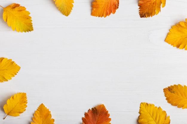 Otoño composición de hojas sobre un fondo blanco.
