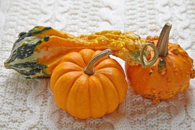 Otoño decoración de otoño con calabazas y jersey de punto.