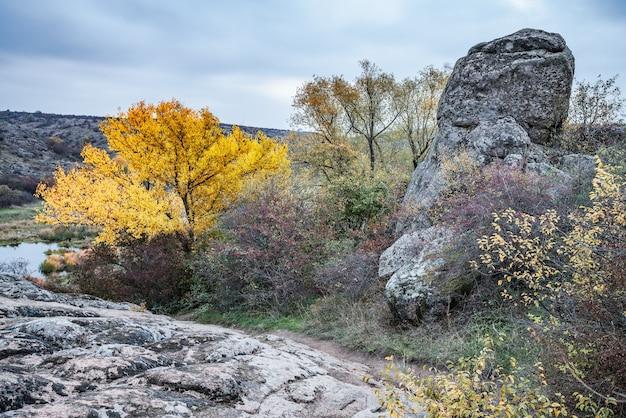 Otoño hermosa vegetación amarillenta y piedras grises cubiertas de musgo y líquenes multicolores