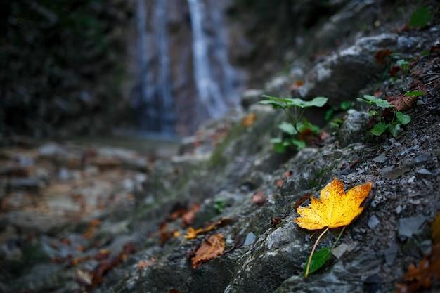 Otoño hoja amarilla sobre un fondo de cascada