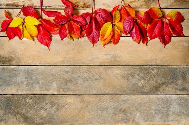 Otoño de hojas de color rojo amarillo brillante sobre un fondo de madera. con espacio de copia. composición de hojas de