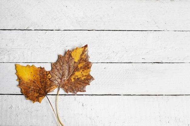Otoño con hojas en madera blanca, espacio de copia