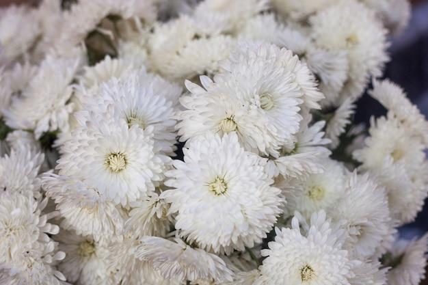 Otoño o caída de fondo floral, flores blancas