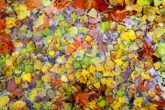 Otoño otoño deja colores de fondo en agua