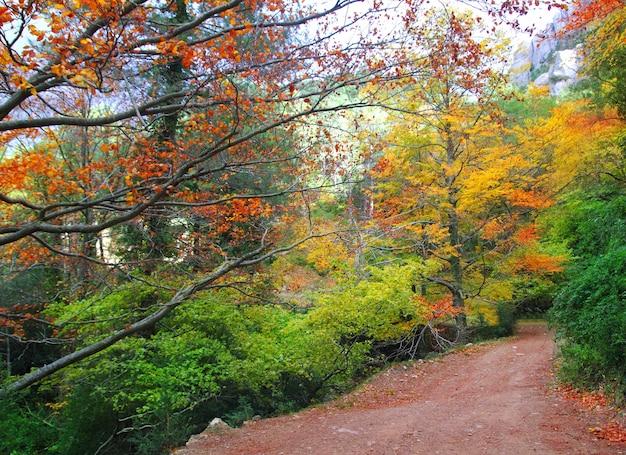 Otoño otoño haya bosque pista amarillo dorado hojas