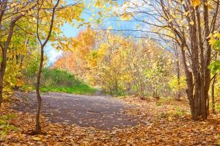 Otoño otoño