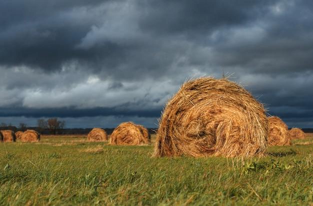 Pacas de paja en un campo bajo un cielo sombrío de otoño