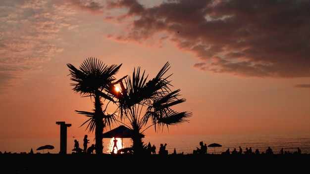 Paisaje al atardecer. puesta de sol en la playa. silueta de palmeras en la playa tropical al atardecer, verano