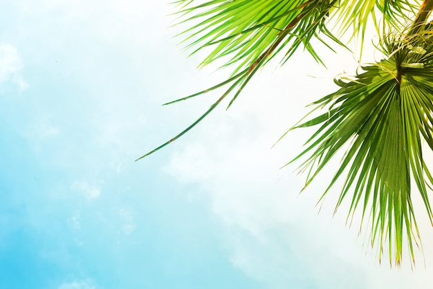 Paisaje con árboles verdes y casa antigua en un cielo azul