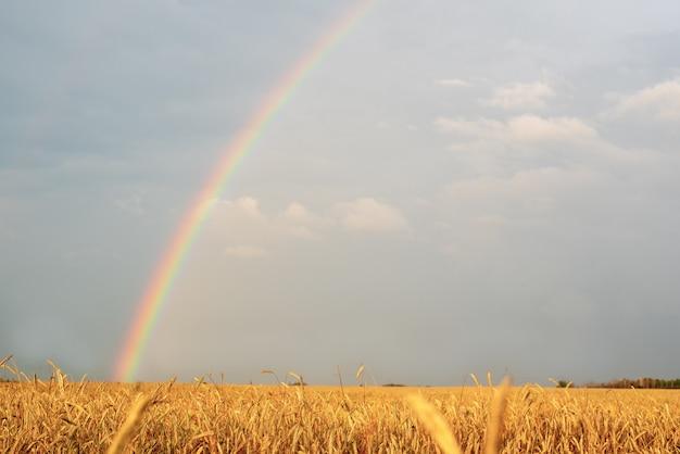 Paisaje con un arcoiris después de la lluvia y el campo de trigo
