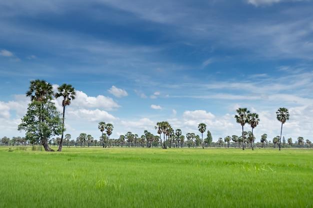Paisaje de arrozal