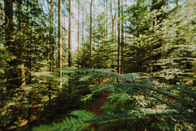 Paisaje bonito de un bosque verde