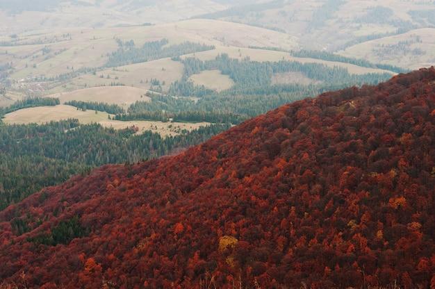 Paisaje de bosque de árboles rojos en las montañas