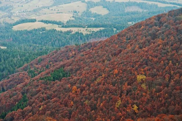 Paisaje de bosque de árboles rojos