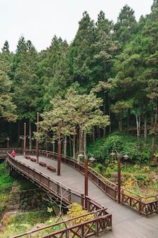 Paisaje del bosque de ciprés brumoso y cedro y puente en alishan.