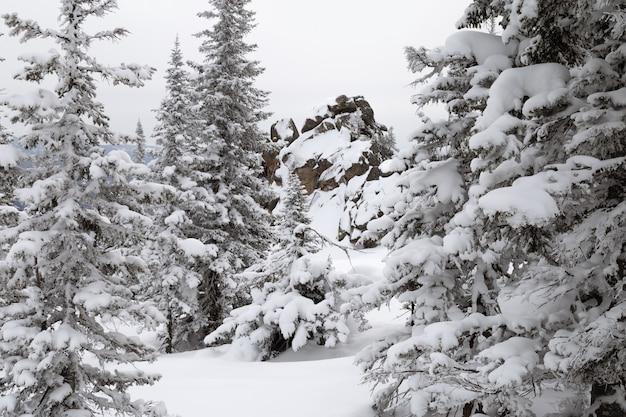 Paisaje de bosque de invierno con abetos cubiertos de nieve en las montañas de altay