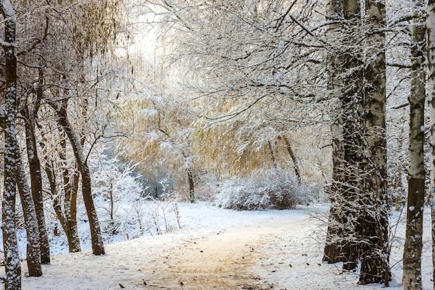 Paisaje de bosque de invierno. árboles bajo una gruesa capa de nieve. rusia, moscú, parque sokolniki