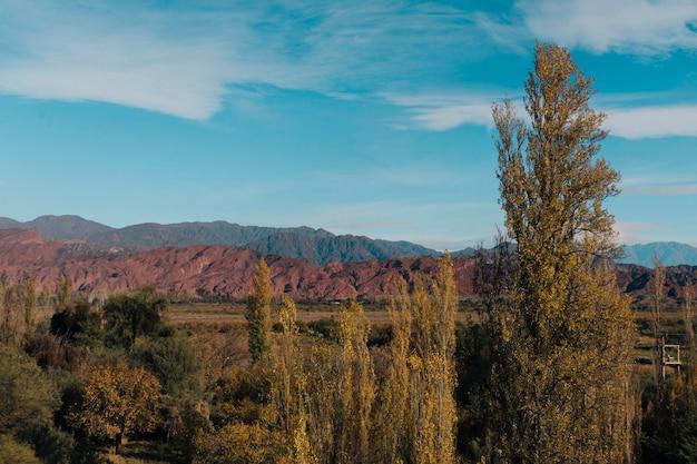 Paisaje de bosque y montañas de otoño con cielo azul