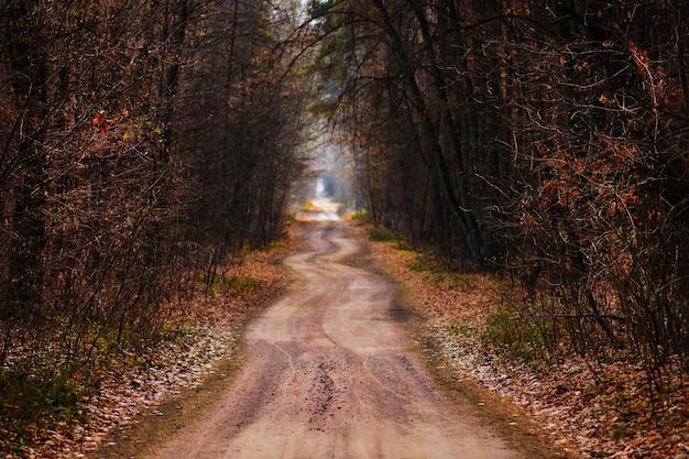 Paisaje de bosque de otoño de fantasía