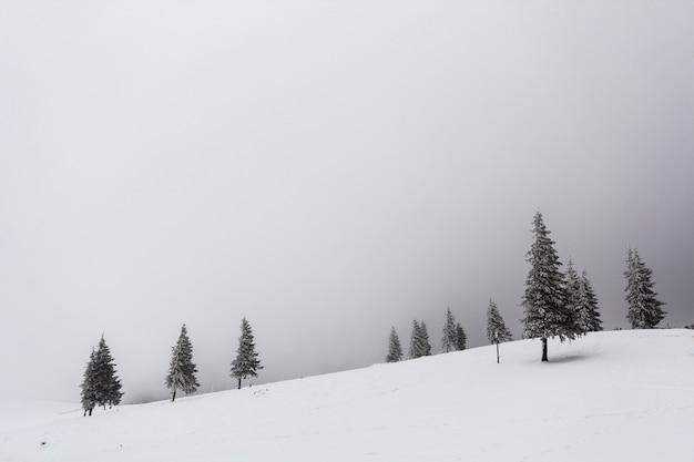 Paisaje brumoso de invierno con pinos nevados