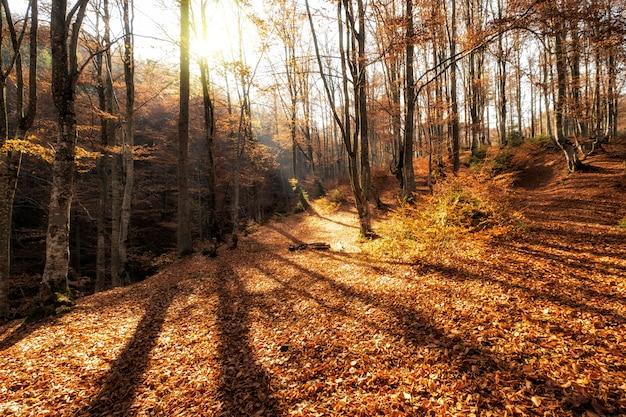 Paisaje cálido de otoño en un bosque, con el sol proyectando hermosos rayos de luz a través de la niebla y los árboles.