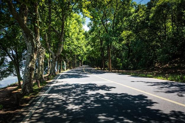 Paisaje de camino recto bajo los árboles, el famoso túnel verde de longtien en taitung, taiwán.
