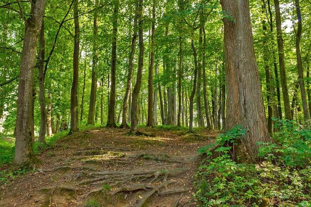 Paisaje con caminos rurales tenedor en bosque.