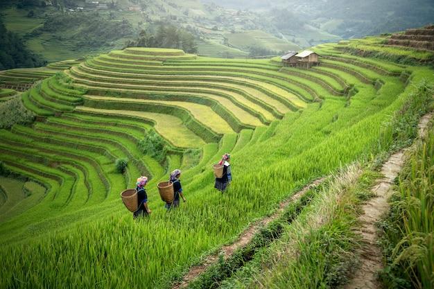 Paisaje del campo de arroz en terrazas asiáticas