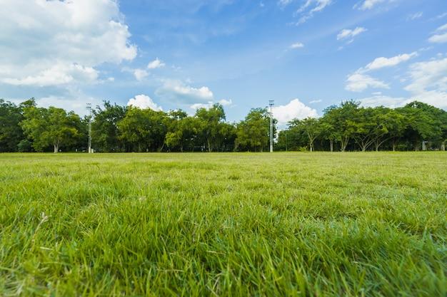 El paisaje del campo de hierba y el uso del parque público del ambiente verde como fondo natural,