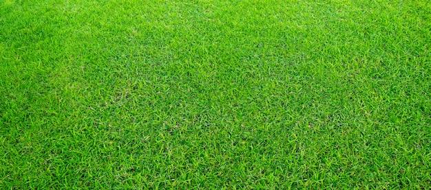 Paisaje del campo de hierba en el uso verde del parque público como fondo natural o contexto