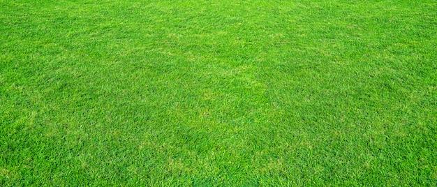 Paisaje del campo de hierba en uso verde del parque público como fondo natural. textura de la hierba verde de un campo.