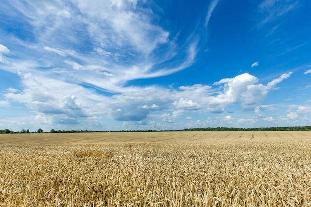 Paisaje de campo rural con cielo azul