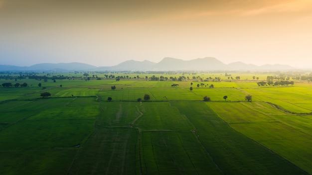 Paisaje del campo verde del arroz del jazmín con la montaña