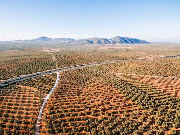 Paisaje con campos de olivos, vista aérea