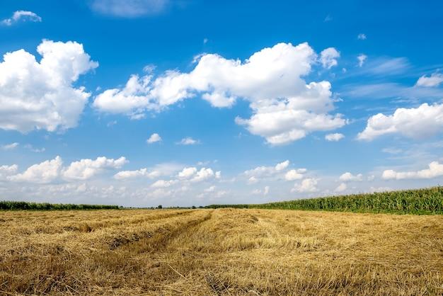 Paisaje de cielo azul y campo amarillo