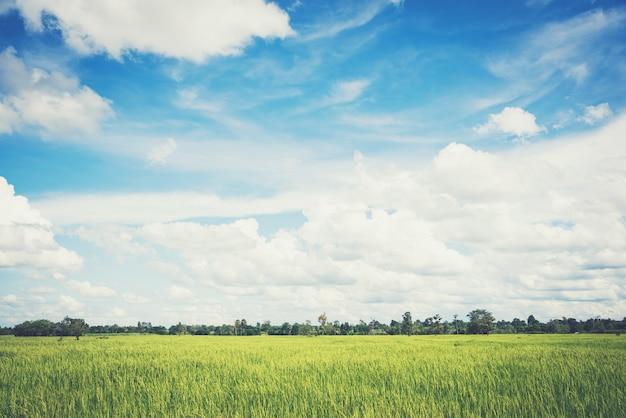 Paisaje de cielo con campos de arroz, suave estilo vintage pastel.