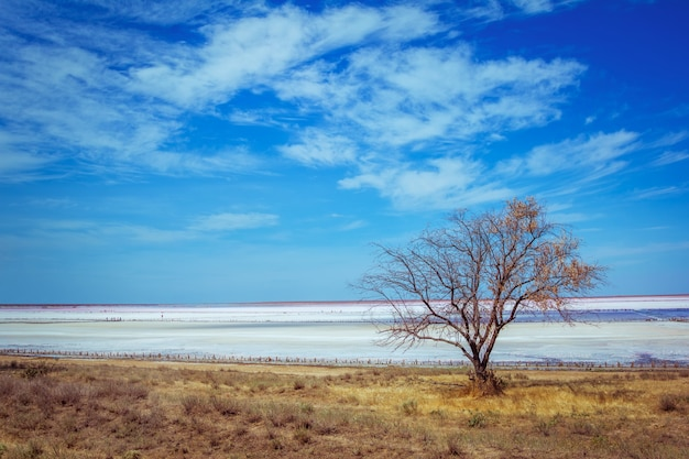 Paisaje de la costa rosa del lago de sal: hierba seca, árbol, superficie de la corteza de sal con charcos de salmuera y cielo azul