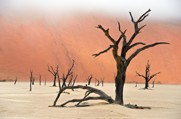 Paisaje de dead vlei, sossusvlei, desierto de namib, namibia, sudáfrica