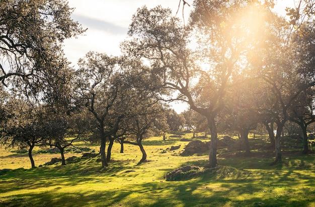 Paisaje de una dehesa verde en un buen día de invierno con rayos de sol. campo en la comunidad autónoma de andalucía, españa