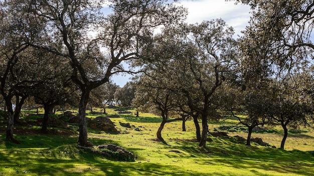 Paisaje de una dehesa verde en un hermoso día de invierno con sol. campo en la comunidad autónoma de andalucía, españa