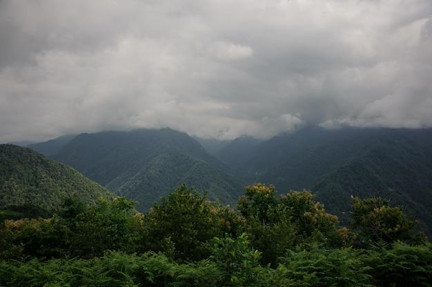 Paisaje de los densos bosques en las montañas.