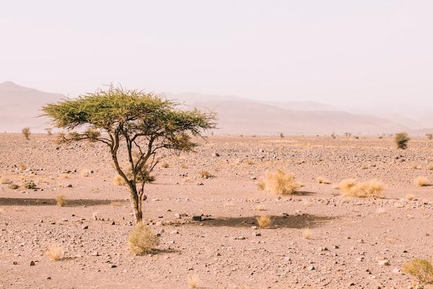 Paisaje de desierto en marruecos