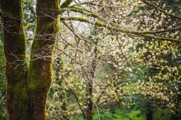 Paisaje forestal con árbol cubierto de musgo