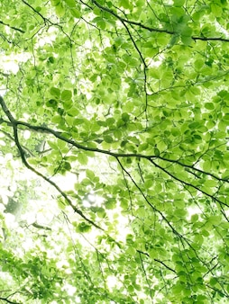 Paisaje forestal bosque espacioso verde