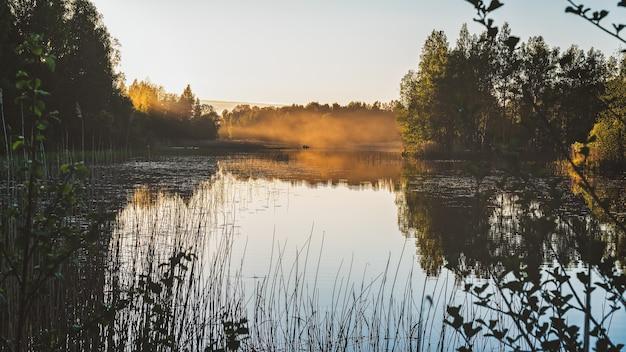 Paisaje de un hermoso lago del bosque a la luz del atardecer.