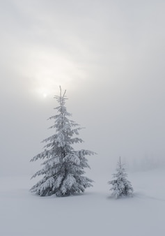 Paisaje invernal con abetos cubiertos de nieve en la niebla