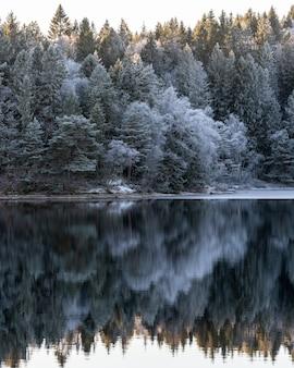 Paisaje invernal, aguas tranquilas y reflejos de árboles y cielo.